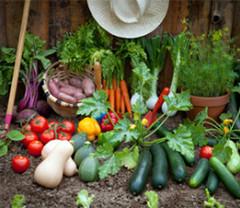 Louer jardin potager du 38 entre particuliers? Location Isère